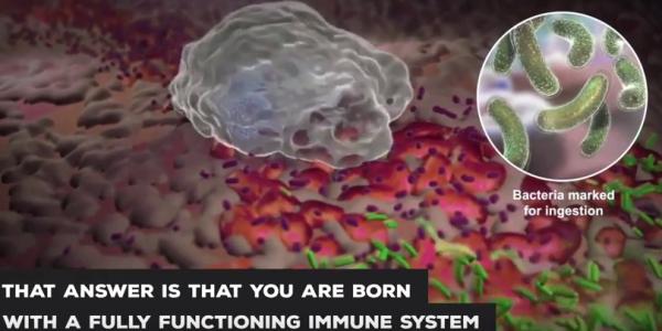 image_vaccine_video